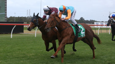 Hard to leave out: Grimoire (right) is among the chances in Wednesday's Events by ATC Handicap at Warwick Farm.
