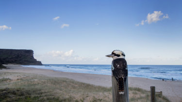 A new management plan for the Royal National Park is among 40 still awaiting approval across the state.
