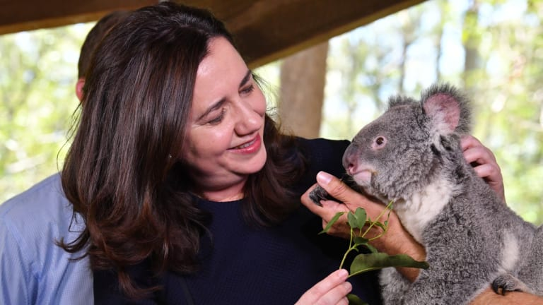 Queensland Premier Annastacia Palaszczuk with Nala the koala at Daisy Hill during the 2017 election campaign.