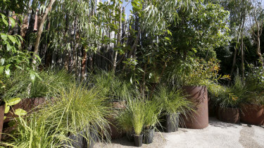 The indigenous flora at Glasshaus is not overly curated and gives the impression of 'realness'.