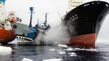 The Sea Shepherd vessel Bob Barker is sandwiched between two Japanese whaling ships.