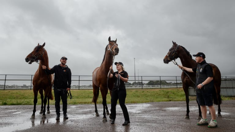Take your pick: Kris Lees-trained Everest contenders Graff (slot-holder Max Whitby and Neil Werrett), Le Romain (GPI Racing) and In Her Time (Tabcorp).