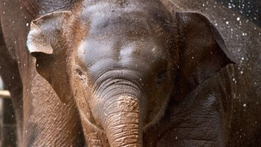 Young Asian elephant female Tukta died of a sudden onset illness on Monday afternoon.