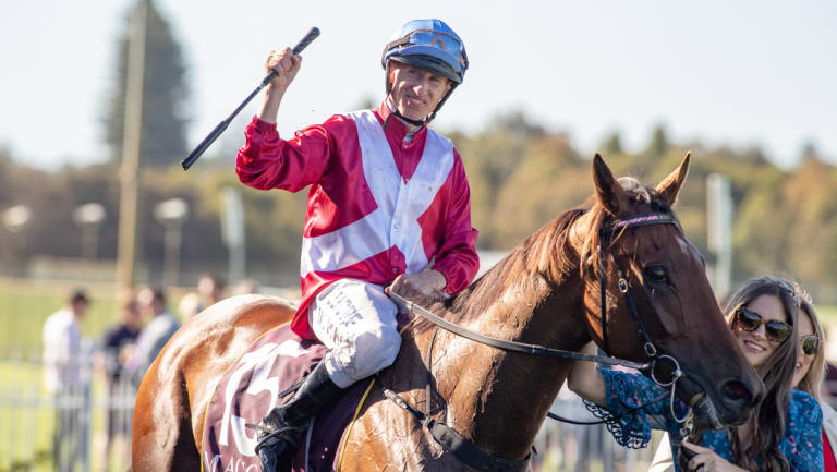 William Pike on Arcadia Queen  after saluting the judges in the Kingston Town Classic.