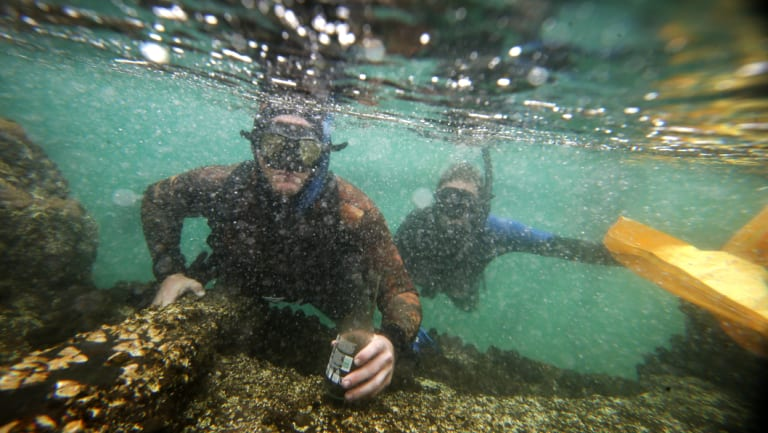 Snorkellers help to clear rubbish out of the water at North Wollongong.