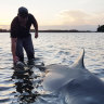 The game fishers 'fighting' bull sharks for sport and science