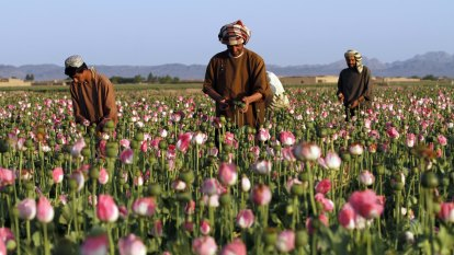 Blast from the past: western Sydney man arrested for alleged supply of opium