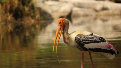 This bird has flown: Climate change sends waterbirds away, paper says
