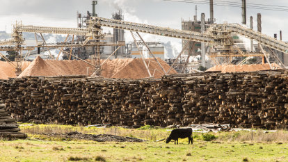 Timber shortfall brings new focus on Maryvale mill future