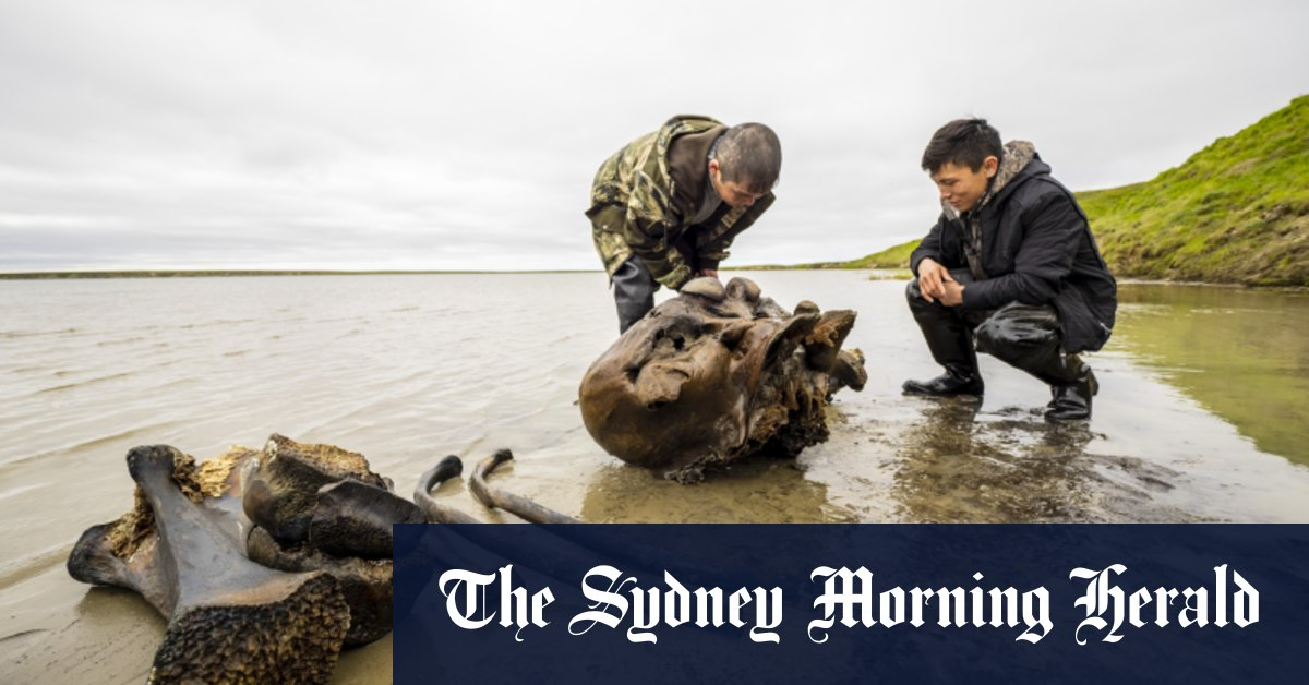 Well-preserved mammoth skeleton parts found in Siberian lake – Sydney Morning Herald