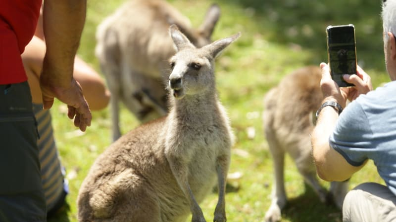 Postcard from Tokyo: Skippy's grown tired as the face of tourism