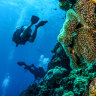 Australia criticises United Nations warning that Great Barrier Reef is in danger