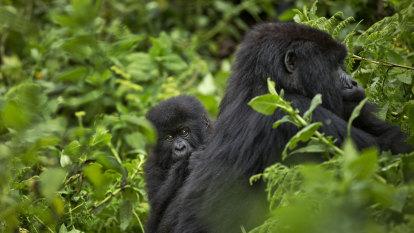 Rwanda kills 19 assailants after deadly national park attack