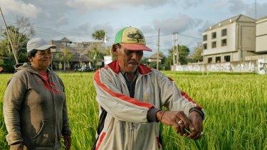 Rice farmers Wayan Soki, left, and Ketut Bintang from Canggu tend to their rice paddies.