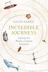 Extraordinary tales of the navigational abilities of the animal world.