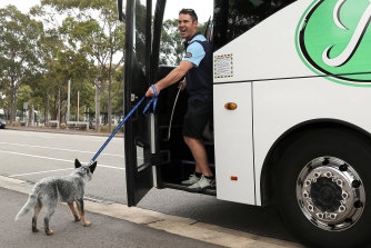 Fittler laughs as he tries to take Blues mascot Bruce the Blue Heeler puppy on the team bus.