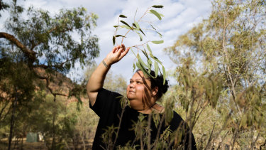 Deanne Wano gathers Arrethe leaves east of Alice Springs.