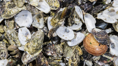 Seafood and buy it: Twiggy's company set to swallow Albany oyster farm
