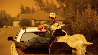Mark Peterson, who lost his home in the Carr Fire, gives water to goats that survived the blaze on Friday, July 27.