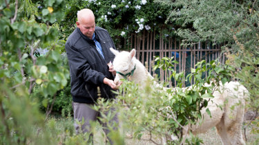 Nils Lantzke with his surviving alpaca Hercules after his other alpaca Mimosa had to be put down after a dog attack.