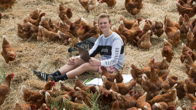 Josh Murray and his chickens.