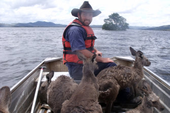 Wildlife conservationists rescue kangaroos from a flooded Burrendong Dam in December 2010.