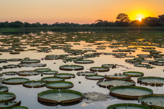 The Pantanal's fauna and flora are one of Brazil's biggest tourism attractions.