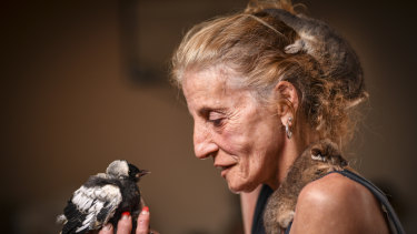 Rescue work: Michele Phillips cares for wildlife at her Oakleigh South home.