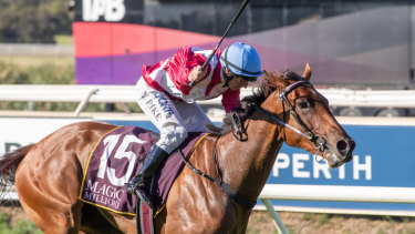 Western wonder: Arcadia Queen is ready to go in the Theo Marks Stakes at Rosehill on Saturday.