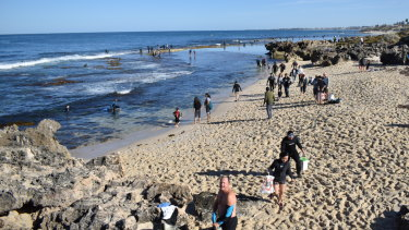 Over a 100 people scattered themselves across the reef of Bennion Beach to get their catch of the day : abalones.