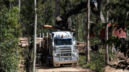 Environmental watchdog to step up surveillance after forest talks fail