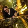 A flea, a claw and a dinosaur: natural history treasures come to Melbourne