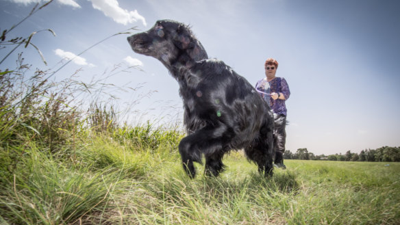 Canberra Now: Dog ban's consequences; and Berry denies blocking visits