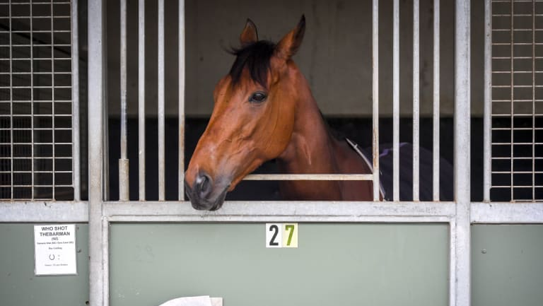 Who Shot Thebarman will run in its fourth Melbourne Cup on Tuesday.
