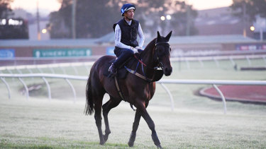 On show: Hugh Bowman returns on Winx after he morning workout in front of the world's press at Rosehill on Thursday.