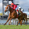 Stokes set for Guineas glory as Rothfire campaign ends