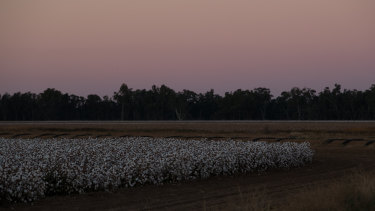 Budget for the bush: Farms such as this cotton farm in Trangie will benefit from the new budget.