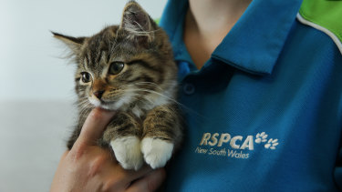 The animal welfare charity has admitted underpaying staff more than $120,000.
