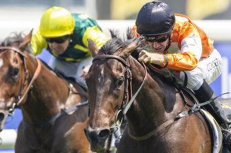 Jason Collett fires Lashes to the front  on Randwick's Kensington track.