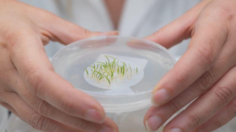 A tiny seedling.
