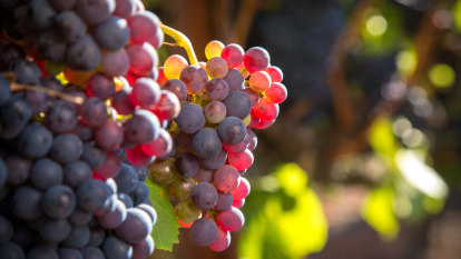 Wine exports dip for first time in years but China exports hold up