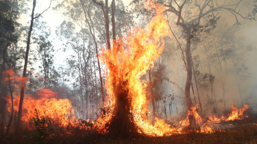 Bushfires razed Queensland's south and northern NSW in September and October.