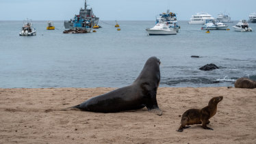 Sea lions on a beach in front of fishing and tourist boats on San Cristobal, Galapagos Islands, Ecuador. The country complained about Chinese vessels overfishing in its vicinity.