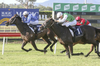 The Summer Sizzler headlines Monday's card at Muswellbrook.