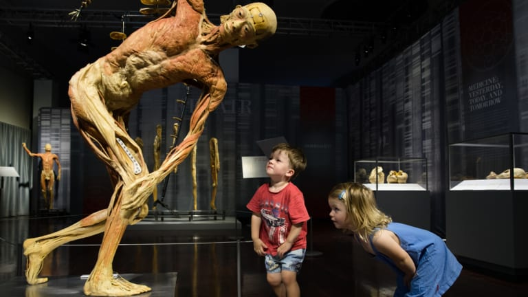The Real Bodies exhibition has been shown around the world for more than 15 years.