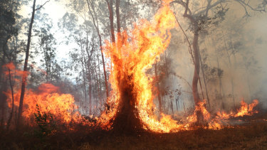 Firefighters battle bushfires in Busbys Flat, northern NSW, on Wednesday.