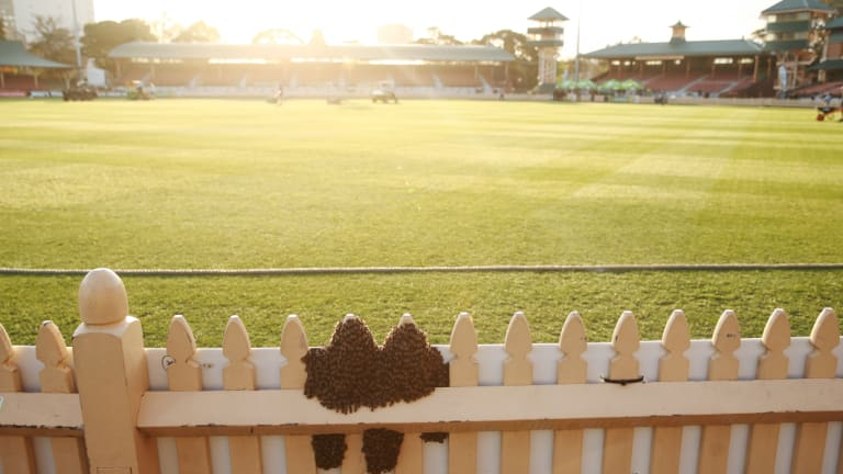 Jlt Cup Cricket Swarm Of Bees Invades Game Between Nsw