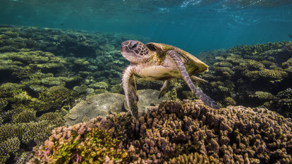 Warning to Australia as UN talks tackle biodiversity crisis