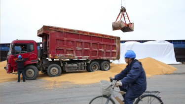 A man cycles past as workers load soybeans imported from Brazil at a port in Nantong in east China's Jiangsu province. Brazil's share of China's soybean imports has soared.