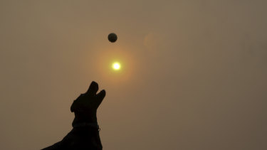 Dogs were coping with thick haze along with their owners at Rodney Reserve, Sydney, on Friday.